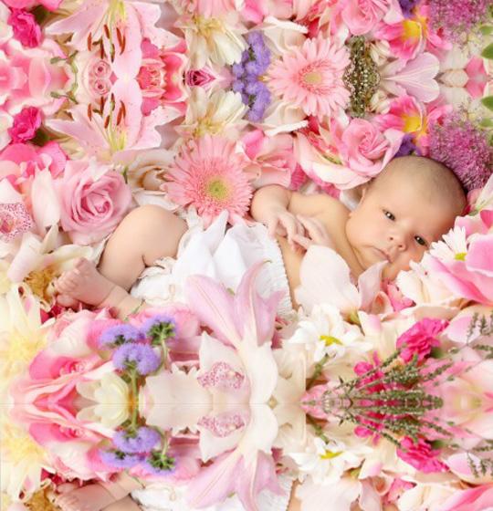 Λουλούδια για Γέννηση-paterakis-apostoli-louloudion